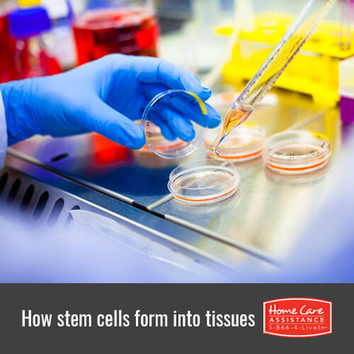 How Stem Cells Regenerate Heart Muscle, Bone, and Cartilage in Sacramento, CA